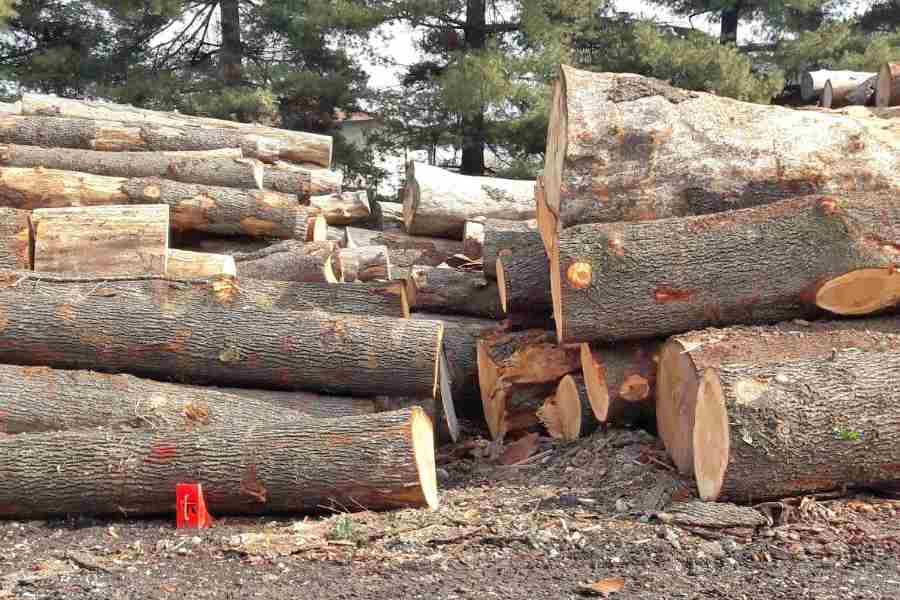 riva 1920 - legno massello - selva design lunch